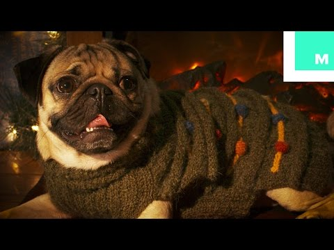 Doug the Pug Holiday Yule Log