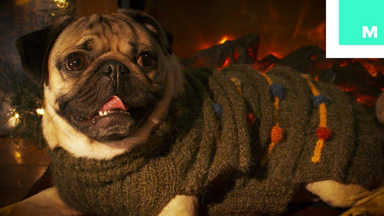 Doug the Pug Holiday Yule Log