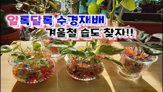 [워터비즈로 수경식물 재배] 겨울철 ⛄습도 조절은 수경…