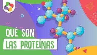 Introducción a las proteínas - Biología - Educatina