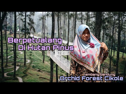 bertualang-di-hutan-pinus-hits-orchid-forest-cikole