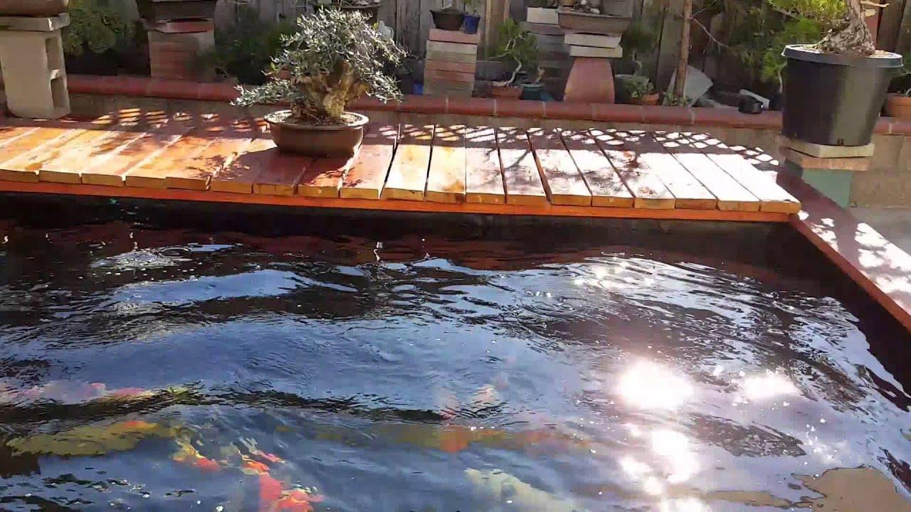 My koi pond and japanese white pine bonsai youtube for Koi pond music