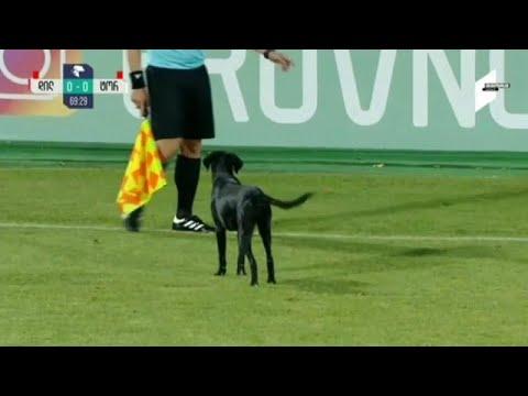 شاهد: كلب يقتحم الملعب خلال مباراة لكرة القدم في جورجيا  - 13:54-2018 / 10 / 8