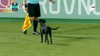 شاهد: كلب يقتحم الملعب خلال مباراة لكرة القدم في جورجيا