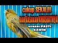 Pancingan Untuk Kenari Kawin Di Jamin Pancingan Ampuh  Mp3 - Mp4 Download