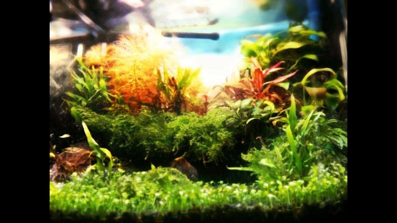 Aquascaping planted fish tank 25 litres high tech nano for Plante nano aquarium