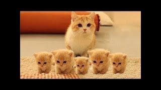 【爆笑】超笑える おもしろ猫動画!最高におもしろ犬,猫,動物のハプニン...