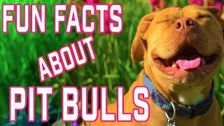 10 Fun Facts About Pit Bulls