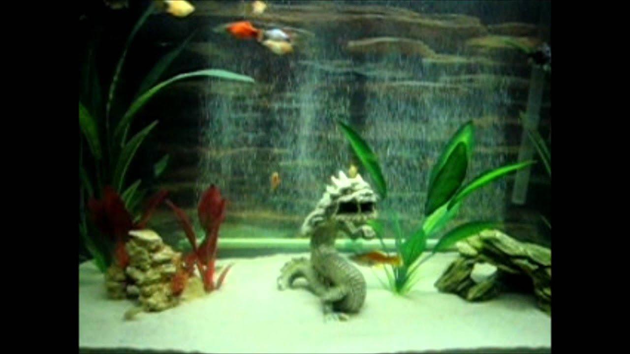 Fish for asian aquarium - Fish For Asian Aquarium