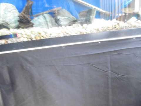 Finished DIY 55 gallon fish tank!