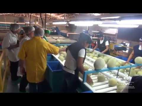 Misión de Taiwán Supervisa Plantas Procesadoras de Carne y Cultivos de Melón en Honduras
