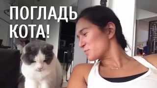 Нежные кошки