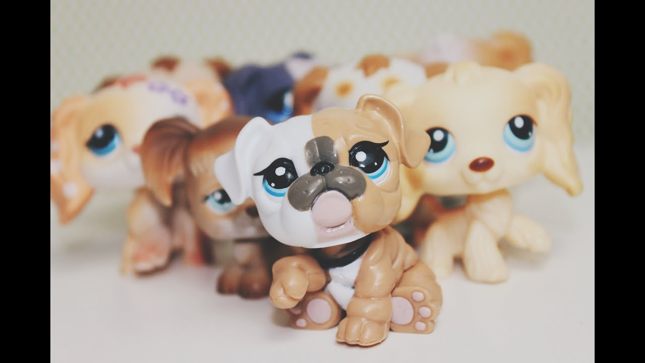 Lps Collection Cocker Spaniels Youtube