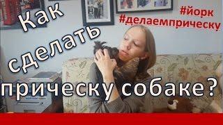 Йорк Смоки: как сделать прическу собаке? #йорк #делаемприческу