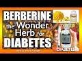 Berberine - The Wonder Herb for Diabetes