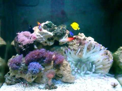 aquario boyu marinho sem frescura