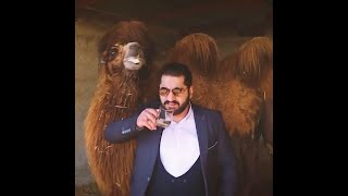 Camel urine cures Corona virus, a man claimed in Iran. Unlike in India, he was arrested