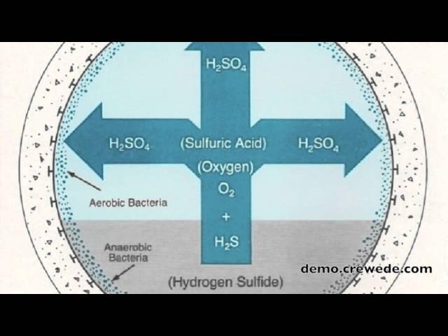 Biocides Presentation
