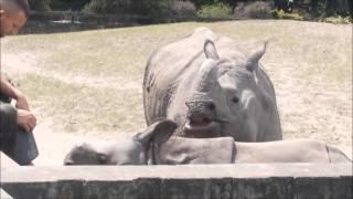 Wiki-шествия Варшавский зоопарк глазами ребенка (часть 2)
