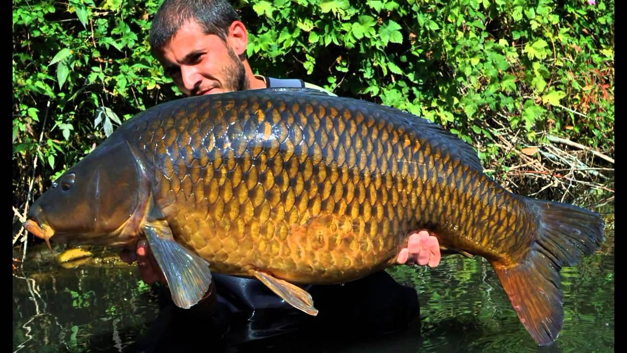 River Carp Fishing in Autumn by Christophe Saint Jean ...