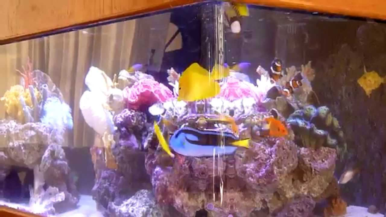 Aquarium    colorful corals and fish    100 gallons   YouTube