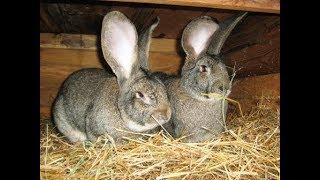 Красивые и необычные кролики