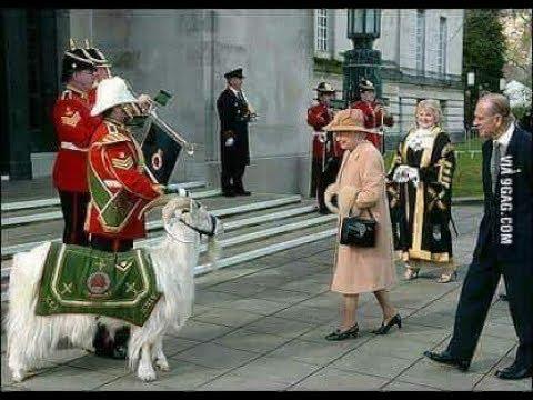 تيس الملكة اليزابيث ضابط رسمي في الحرس الملكي البريطاني Youtube