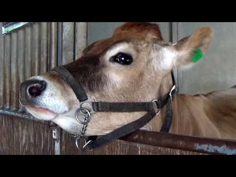 FARM ANIMALS on the FARM (real authentic sounds) Compilation - 90 MIN. KID COLLECTION