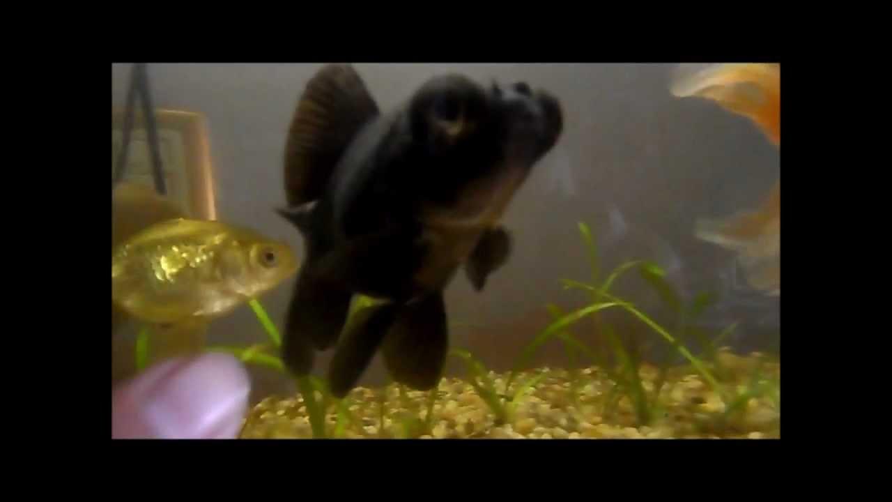 Especies de peces youtube for Especies de peces