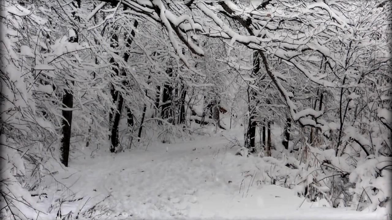 10 Hours Snowy Forest 1 Video Audio Winter Birds 1080hd Slowtv