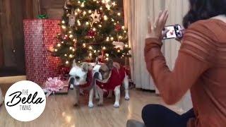 Josie and Winston's festive Christmas photo shoot