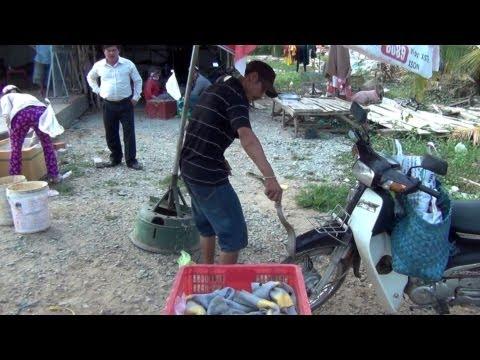 Bắt rắn hổ ngựa bằng tay - Snake