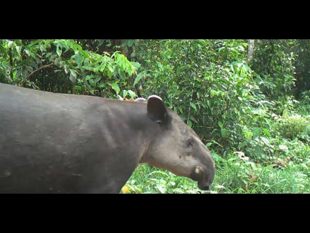 Ep3 Selvador Maquenque Rainforest Project - Save The Rainforest