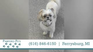 Pampered Pets | Pet Services in Ferrysburg