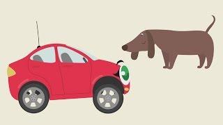 БИБИКА - Кошка, собака, хомячок, черепаха - Развивающий мультик для малышей про машинки и животных