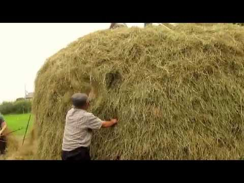 Building a Pike of Hay in the old way on the lands of Sheila Holohan Kievy, Carrigallen  30 Jy 2014