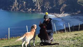 Dog Friendly Caravan Park accommodation near Lands end, St Just and Penzance Cornwall