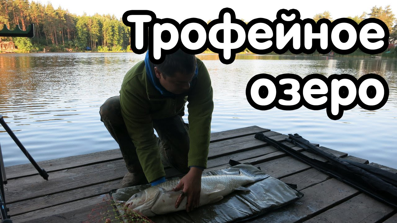 Ловля карася киевская обл