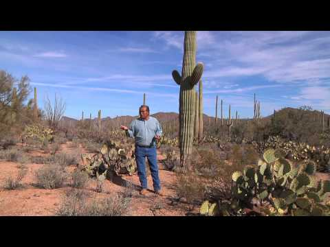 Food, Medicine, and Spitiruality in the Sonoran Desert