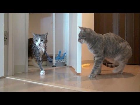 心配するネコ - Worried Cat -