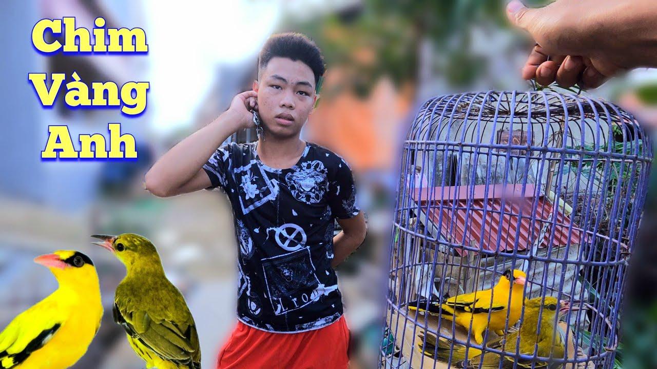 Download Che Bạt Tránh Rét Cho Avi Và Đón Thêm Thành Viên Mới - Chim Vàng Anh / Quế Nghịch