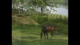 hästens förutsättningar för arbete