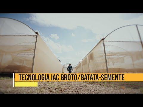 Tecnologia do IAC Broto Batata-Semente