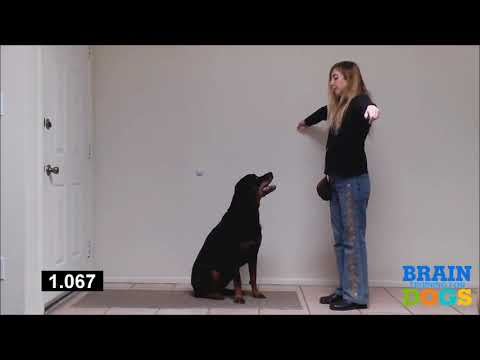 brain-training-for-dogs-the-airplane-game-exam-demonstration-1