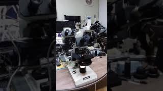 현미경관찰 혈액.적혈구.백혈구.microscope.RB…
