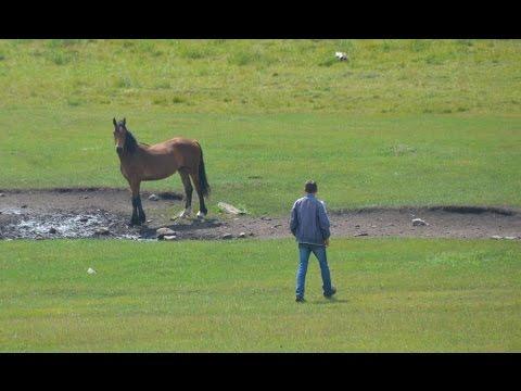 видео: Поиск лошадей, отбившихся от табуна