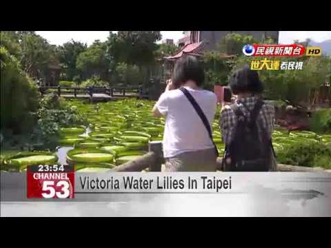 Victoria Water Lilies In Taipei