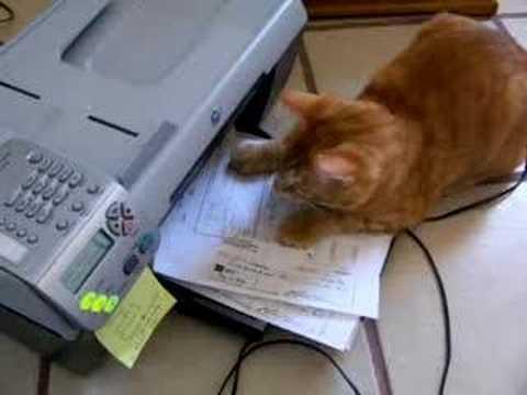cats vs printers 10