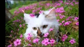Training Tips - Tricks Guide Cat Training Secrets; Cat Toilet Training Problems
