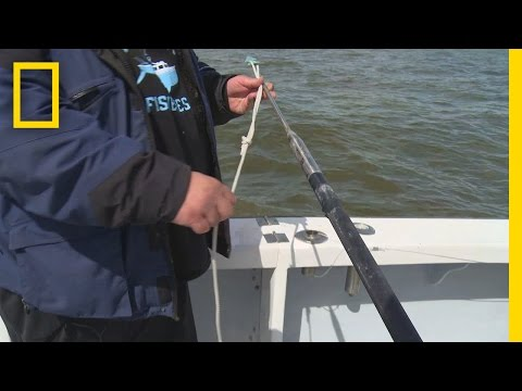 Fishing Tips: How to Rig a Harpoon | Wicked Tuna: Outer Banks